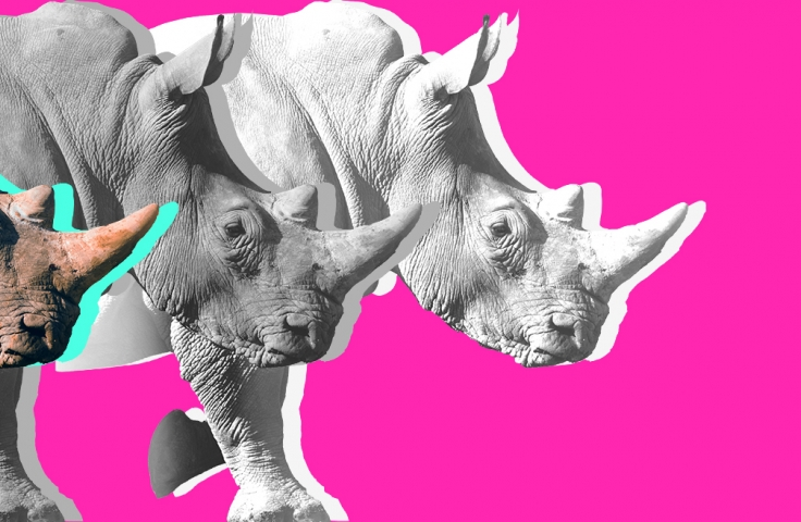 rhinoceros against pink background