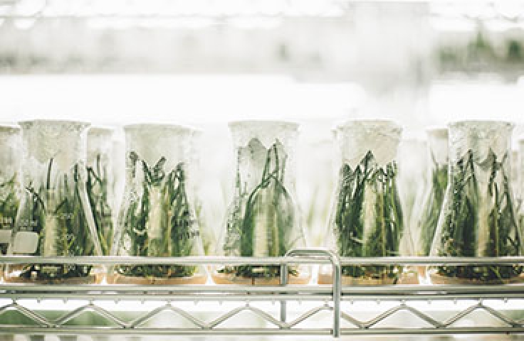 Science jars filled with green plants