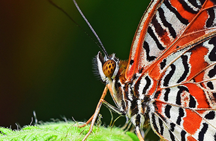 Close-up of orange, white and black butterfly