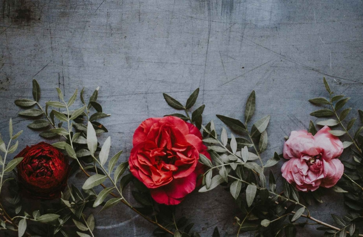 Three red and pink flowers on a dark grey concrete background.