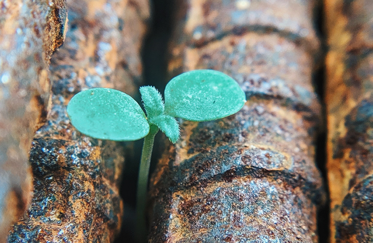 Green seedling popping through rusted iron rods